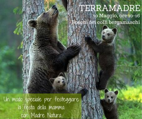 TERRAMADRE-x-wordpress